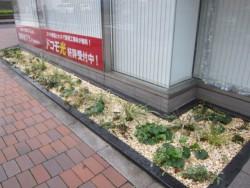 hamacyonakanohashi04