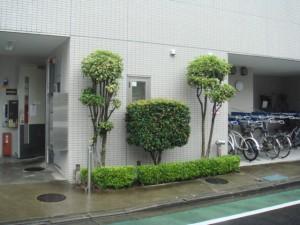 honatsugi03