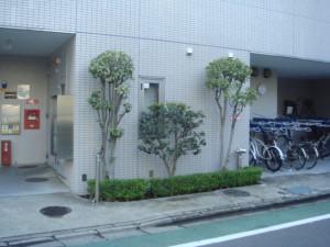 honatsugi04