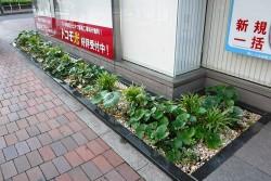 hamacyonakanohashi01