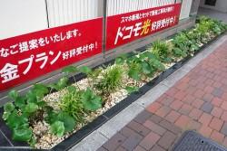 hamacyonakanohashi02